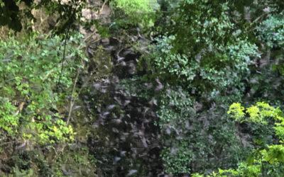 Bat Volcano